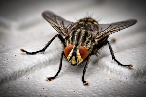 Insect Control, Pest Control in Bromley-by-Bow, Bow, E3. Call Now 020 8166 9746